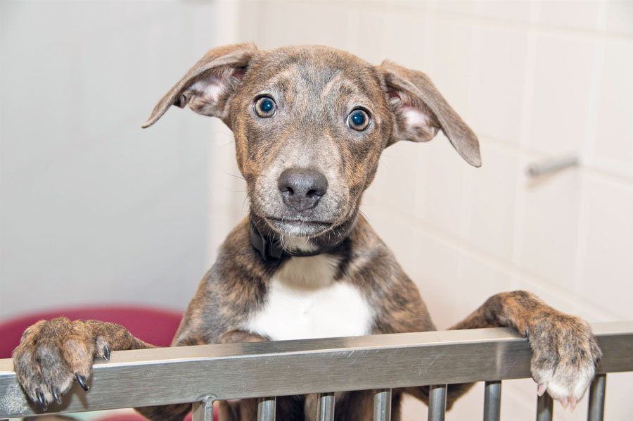 Dogs Trust Survey Reveals Over 4 173 People Heartlessly