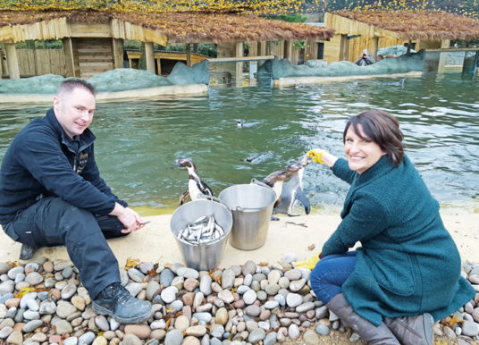 Penguins Settle In New Home