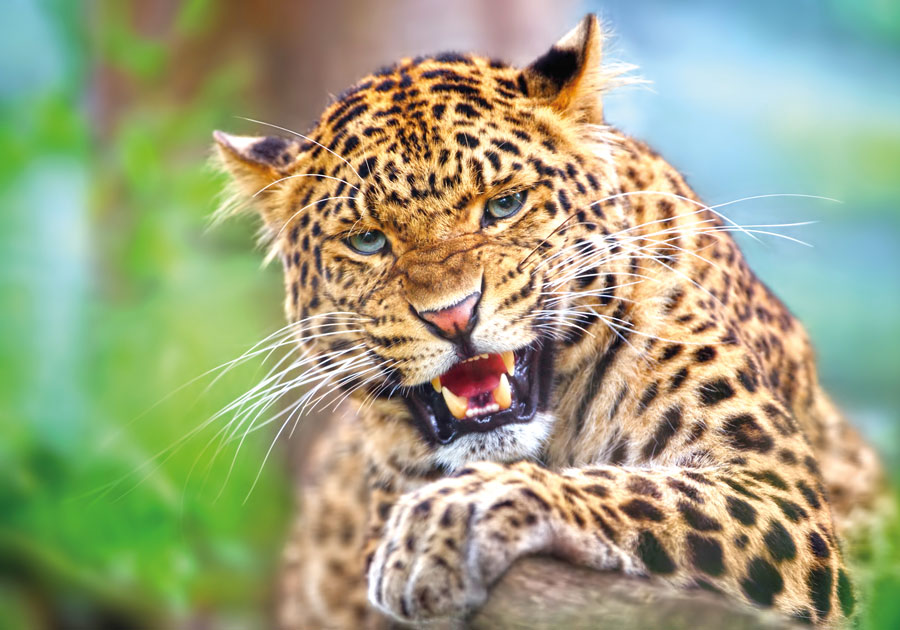 aff88a4b286ee2 Born Free Call For Legislation Review On Keeping Wild Animals As Pets