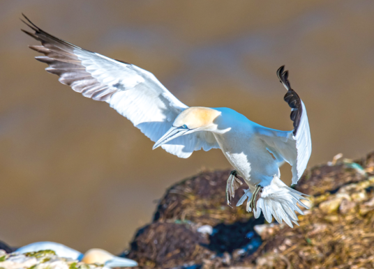 EXPLORE THE LAND OF THE GIANTS AT RSPB BEMPTON CLIFFS