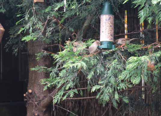 With Christmas In Our Sights And The Cold Nights Drawing In, The RSPB Is Appealing  To People To Help Our Garden Birds  Survive The Winter