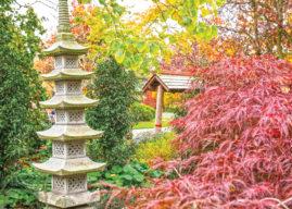 Dealership Helps Open Japanese Oasis Of Calm In Harrogate
