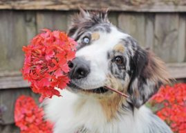 13 Potential Garden Hazards For Dogs