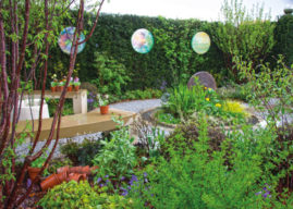 BEST IN SHOW FOR PERENNIAL AT HARROGATE SPRING FLOWER SHOW