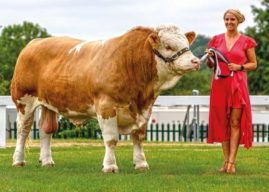 161st GREAT YORKSHIRE SHOW