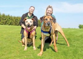 ON THE DOUBLE –  HOME NEEDED FOR DEVOTED DOGGIE DUO